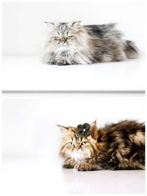 fotografia animali sardegna